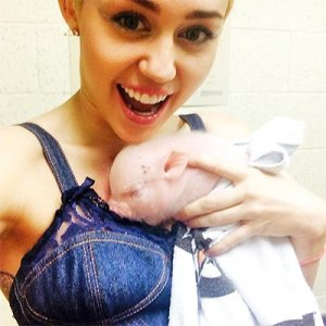 Pet-lover-Miley-Cyrus-added-Piglet-to-family